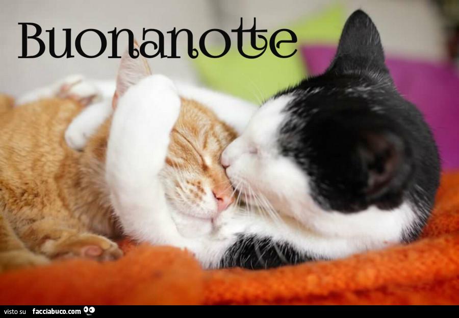 Gatti Si Abbracciano Buonanotte Facciabuco Com