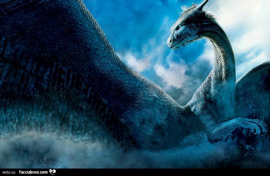 Drago Blu Facciabucocom