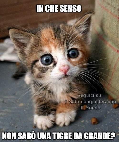 Risultato immagini per gatti nonsarò una tigre