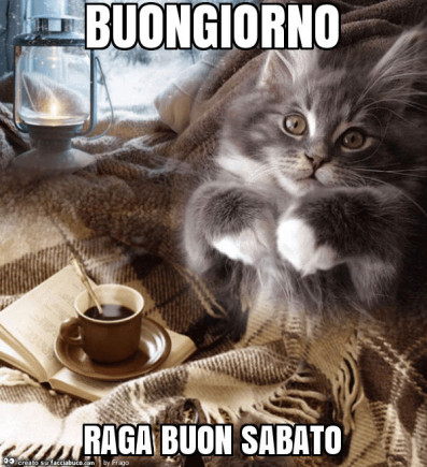 Gatto con caff buongiorno raga buon sabato for Immagini divertenti di sabato